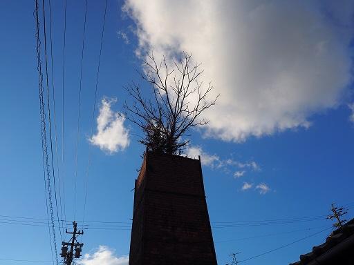 20141214_煙突から木.jpg