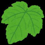 plant_leaf_budou.png