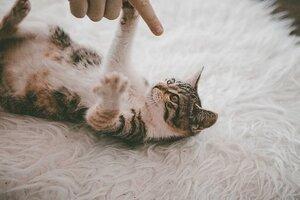 cat-4803841__340.jpg
