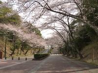 桜3-31 (1).JPGのサムネイル画像