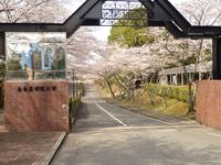桜3-31 (4).JPGのサムネイル画像